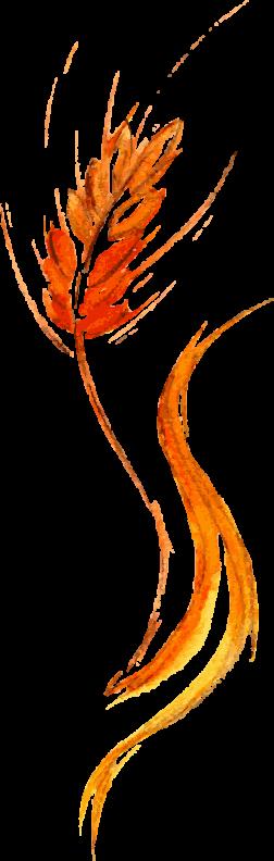 Fern Shape